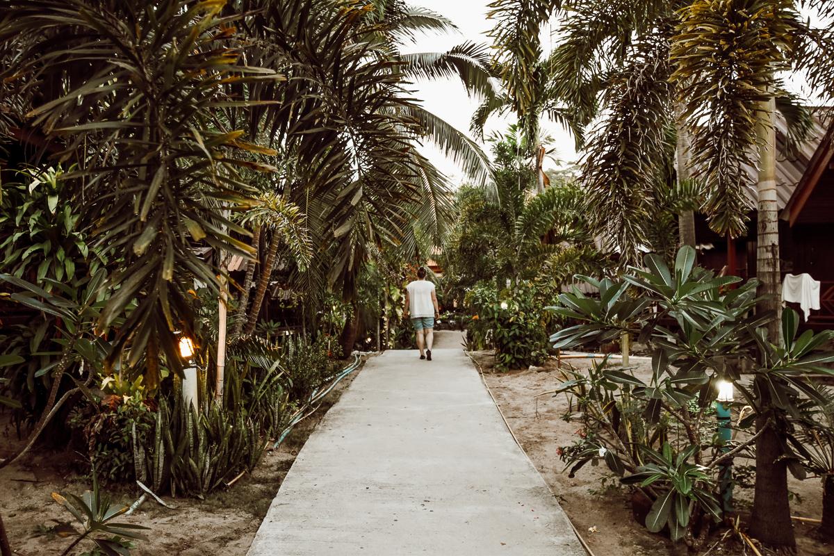 Koh Tao Dschungel