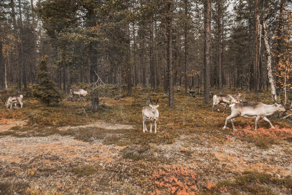 Finnland Wandern1